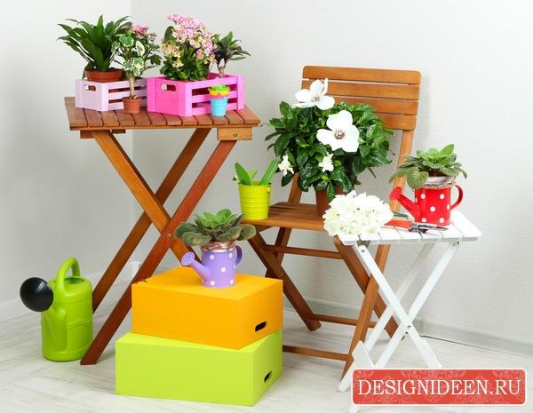 Рекомендации при покупке цветов в горшке